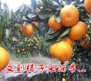 苏州草鸡蛋价格_苏州西山旅游【网站首页】